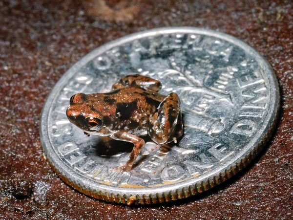 smallestfrog