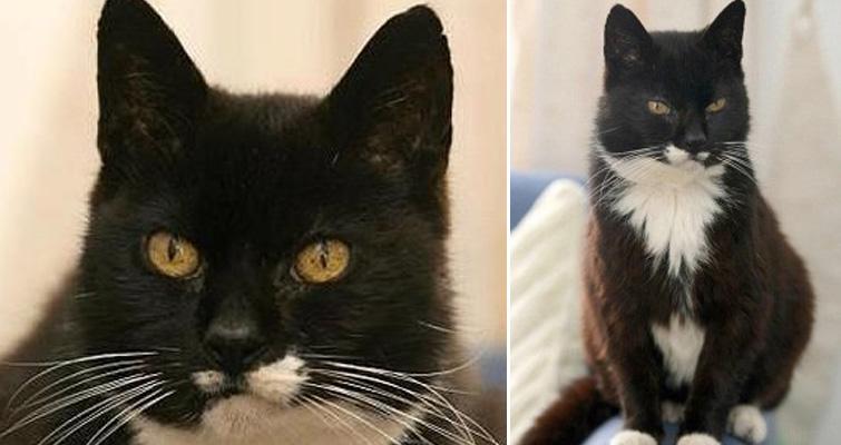 World S Oldest Cat Corduroy Diet